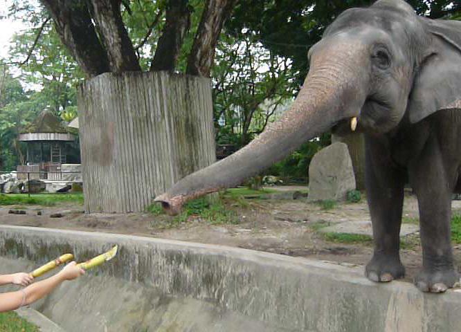 来年にはパンダも!? マレーシア国立動物園