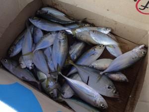 fishing_05