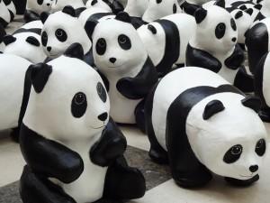 panda_15